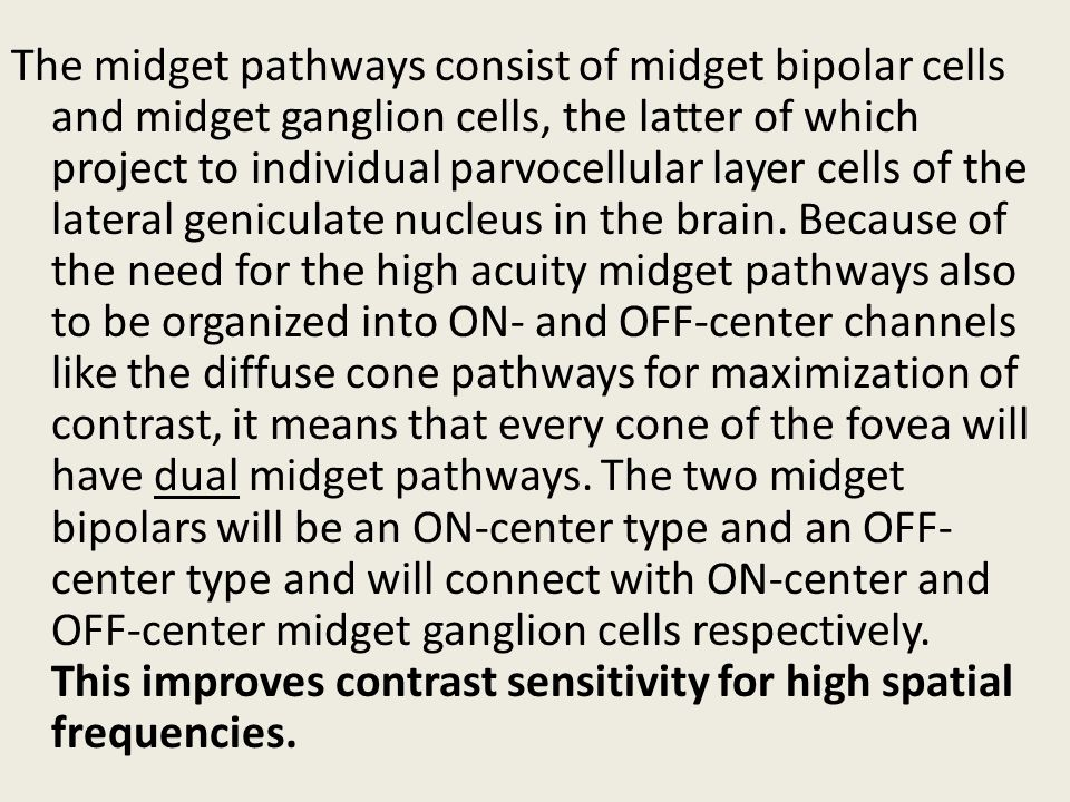 The midget pathways consist of midget bipolar cells and midget ganglion cells, the latter of which project to individual parvocellular layer cells of