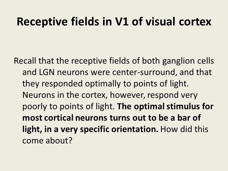 Receptive fields in V1 of visual cortex Recall that the receptive fields of both ganglion cells and LGN neurons were center-surround, and that they re