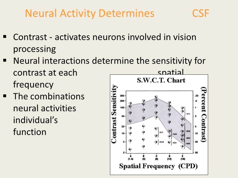 Neural Activity Determines CSF  Contrast - activates neurons involved in vision processing  Neural interactions determine the sensitivity for contra