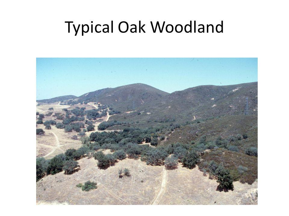 Typical Oak Woodland