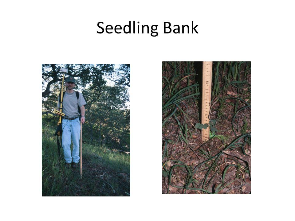 Seedling Bank