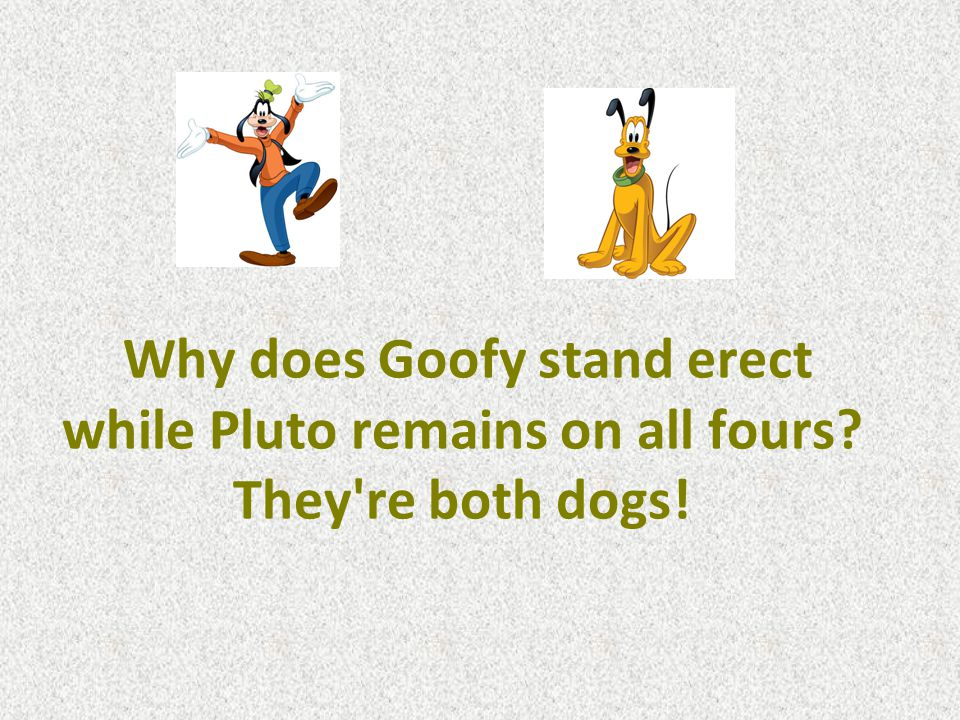 Why does Goofy stand erect while Pluto remains on all fours They re both dogs!