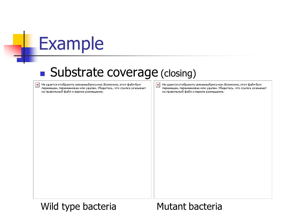Example Substrate coverage (closing) Wild type bacteriaMutant bacteria