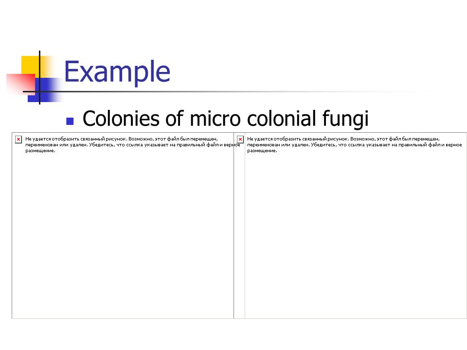 Example Colonies of micro colonial fungi