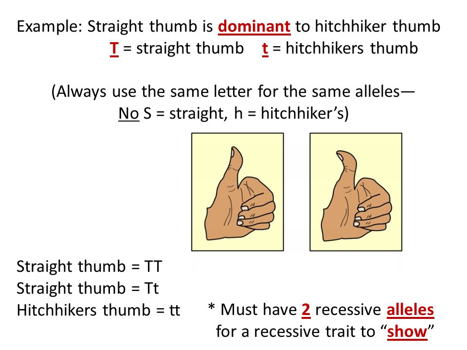 Example: Straight thumb is dominant to hitchhiker thumb T = straight thumb t = hitchhikers thumb (Always use the same letter for the same alleles— No S = straight, h = hitchhiker's) Straight thumb = TT Straight thumb = Tt Hitchhikers thumb = tt * Must have 2 recessive alleles for a recessive trait to show