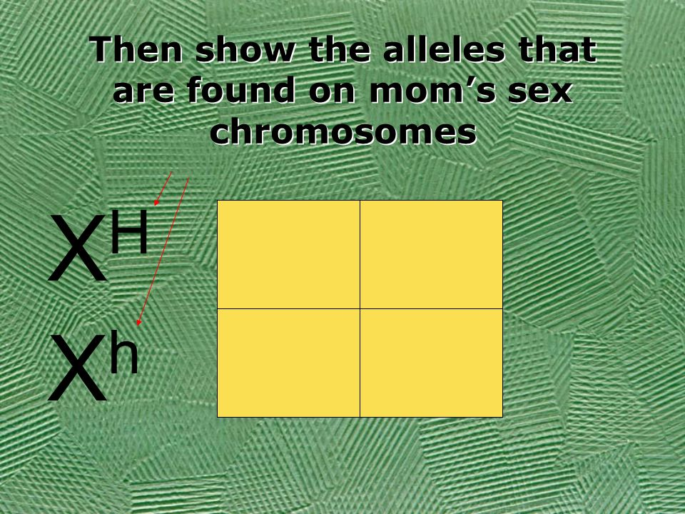 XHXH XhXh Then show the alleles that are found on mom's sex chromosomes