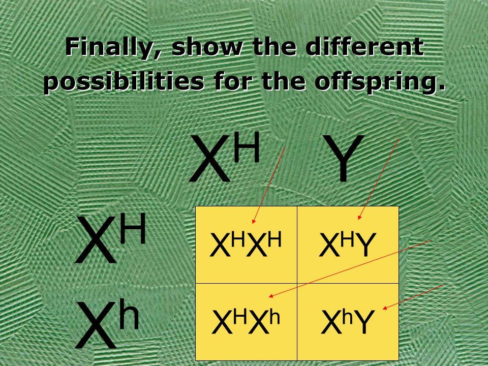 Finally, show the different possibilities for the offspring. XHXHXHXH XHYXHY XHXhXHXh XhYXhY XHXH Y XHXH XhXh