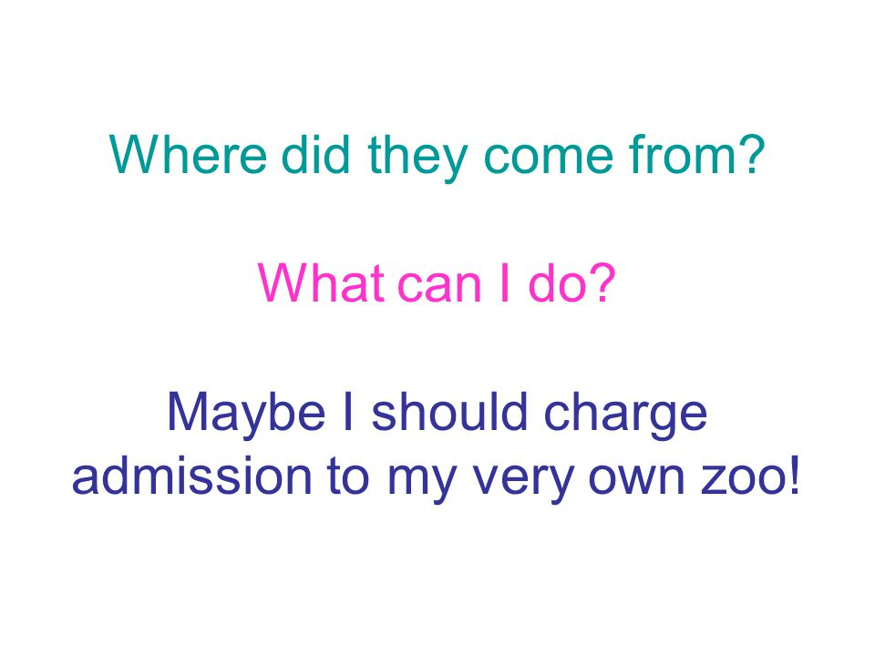 Where did they come from? What can I do? Maybe I should charge admission to my very own zoo!