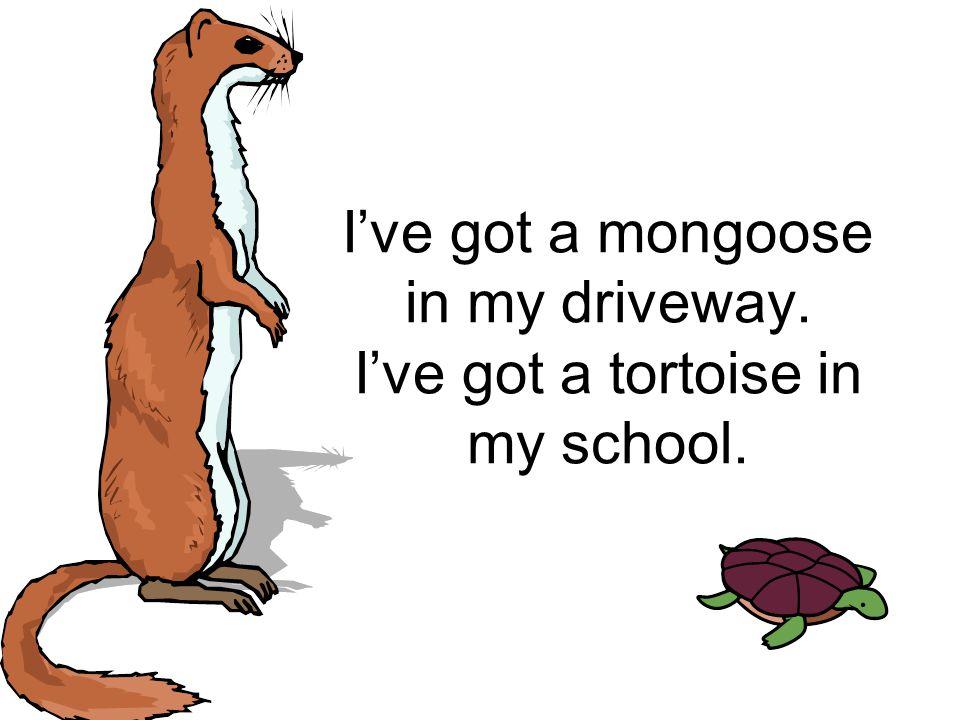 I've got a mongoose in my driveway. I've got a tortoise in my school.