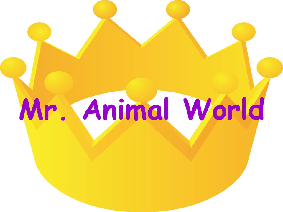 Mr. Animal World