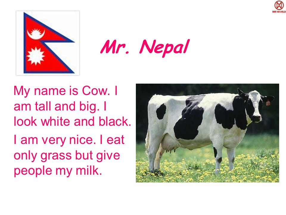 Mr. Nepal My name is Cow. I am tall and big. I look white and black.