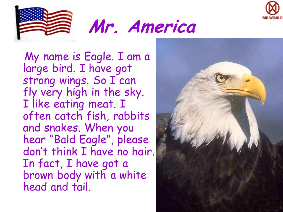 Mr. America My name is Eagle. I am a large bird.