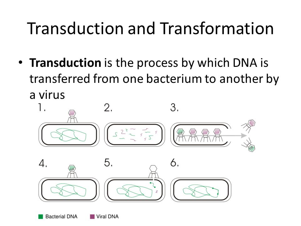 Bacterial transformation is the process by which bacterial cells take up naked DNA molecules from the surrounding media.