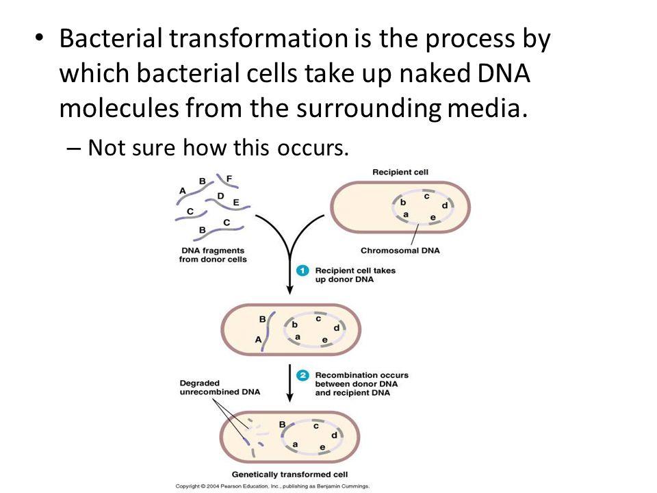 Antibiotic Resistance Lab showed how bacteria can establish antibiotic resistance. Bad!
