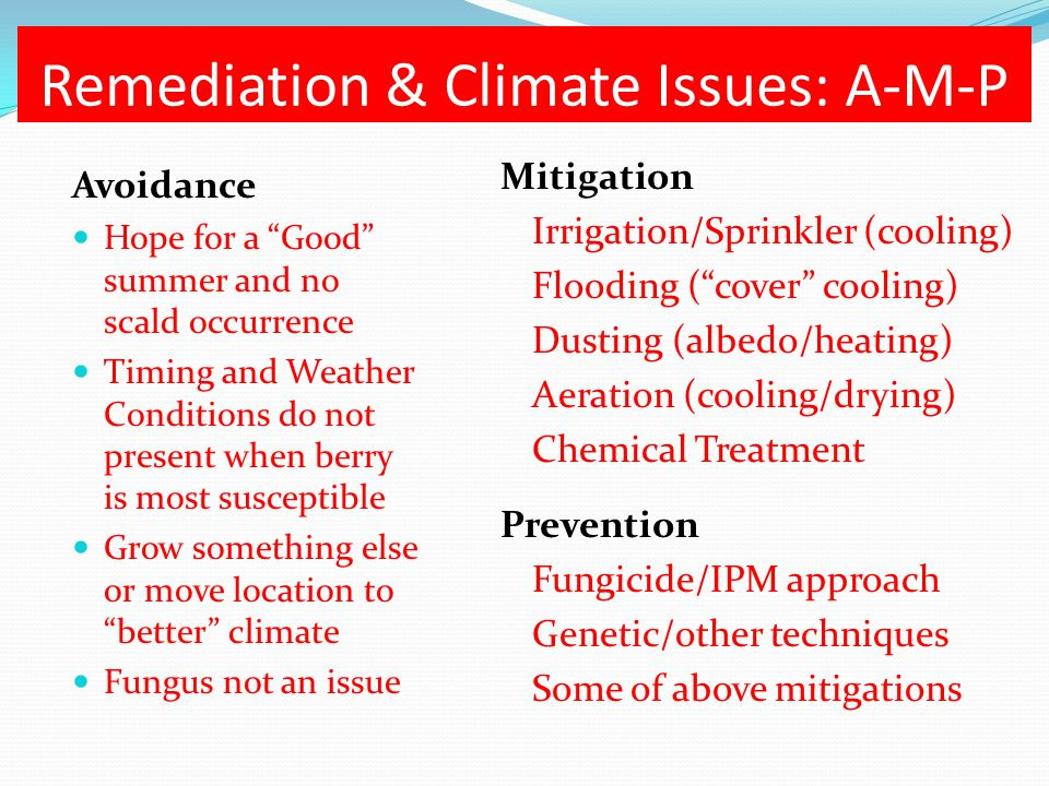 "Remediation & Climate Issues: A-M-P Avoidance Hope for a ""Good"" summer and no scald occurrence Timing and Weather Conditions do not present when berry"