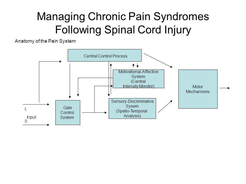 Managing Chronic Pain Syndromes Following Spinal Cord Injury Anatomy of the Pain System Central Control Process Motor Mechanisms Motivational-Affectiv