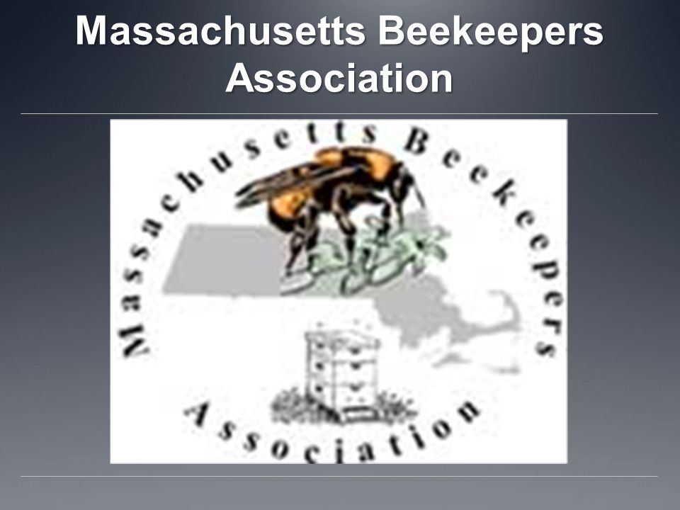 Massachusetts Beekeepers Association