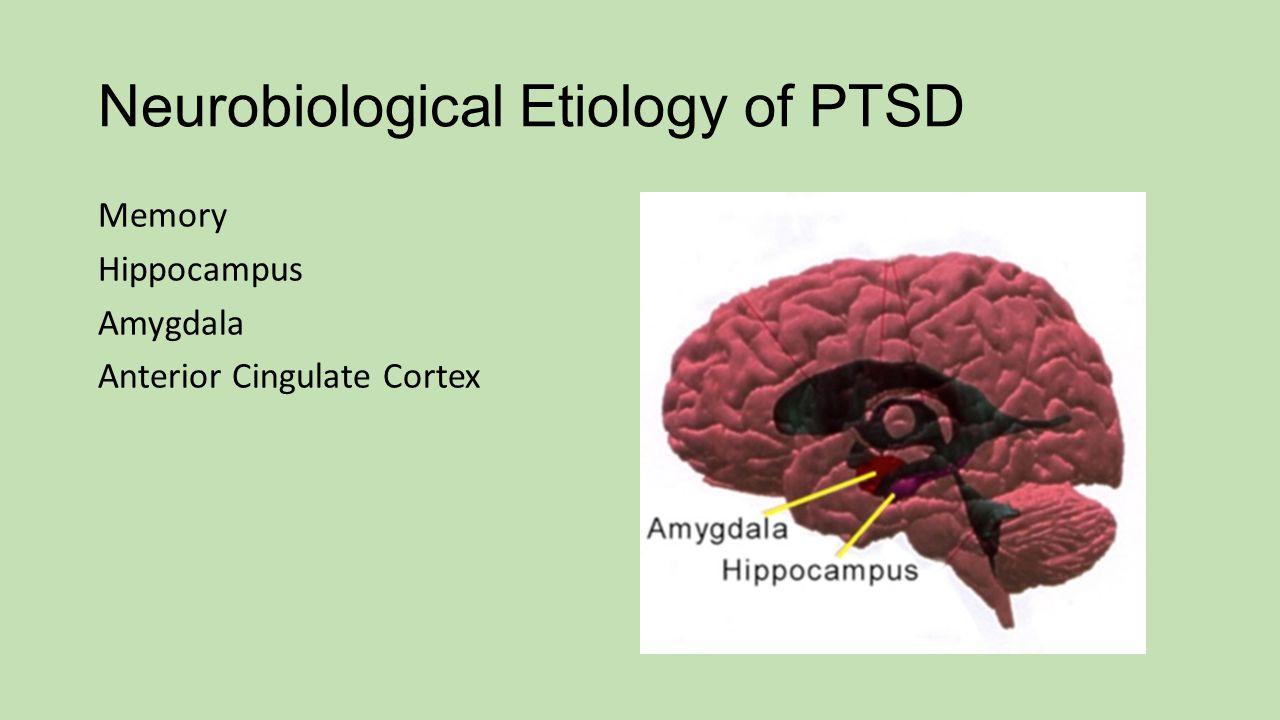 Neurobiological Etiology of PTSD Memory Hippocampus Amygdala Anterior Cingulate Cortex