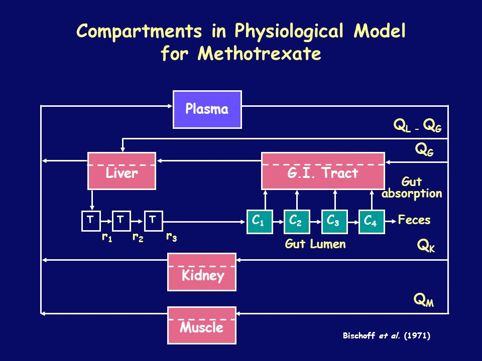 Compartments in Physiological Model for Methotrexate TTT Plasma LiverG.I.