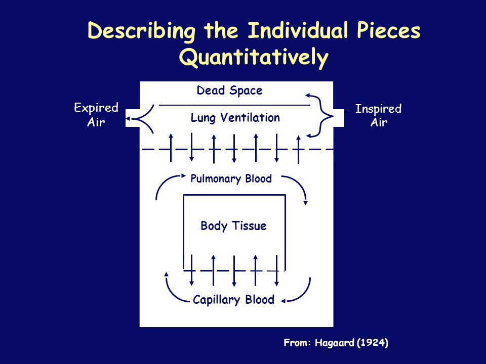 Describing the Individual Pieces Quantitatively Dead Space Lung Ventilation Capillary Blood Inspired Air Expired Air From: Hagaard (1924) Body Tissue Pulmonary Blood
