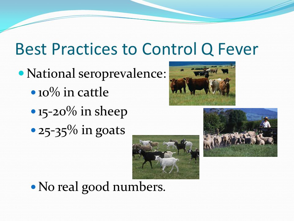 Best Practices to Control Q Fever National seroprevalence: 10% in cattle 15-20% in sheep 25-35% in goats No real good numbers.