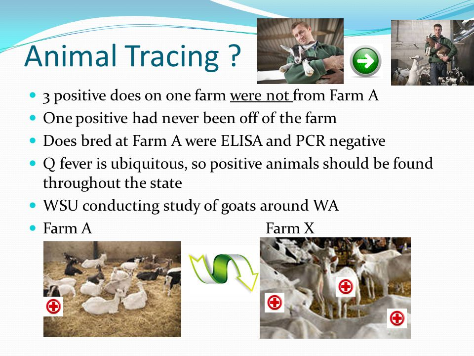 Animal Tracing ? 3 positive does on one farm were not from Farm A One positive had never been off of the farm Does bred at Farm A were ELISA and PCR n