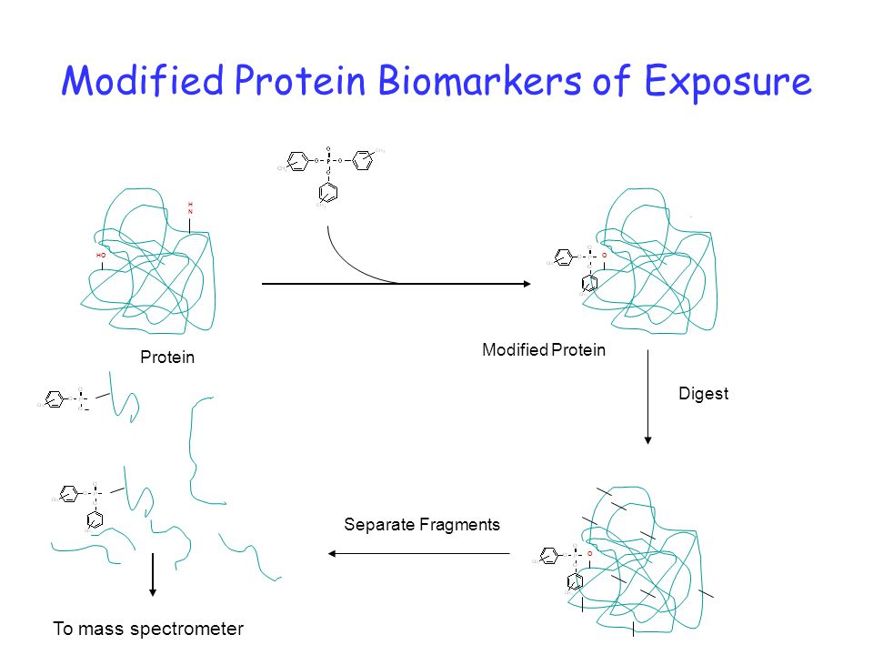 Modified Protein Biomarkers of Exposure HO HNHN O.