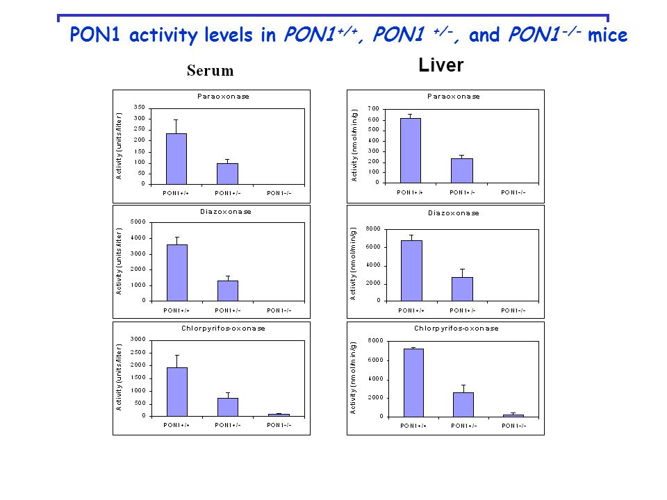 PON1 activity levels in PON1 +/+, PON1 +/-, and PON1 -/- mice Liver
