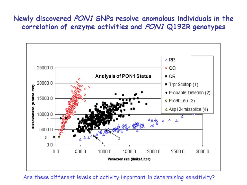 Newly discovered PON1 SNPs resolve anomalous individuals in the correlation of enzyme activities and PON1 Q192R genotypes Analysis of PON1 Status Are these different levels of activity important in determining sensitivity