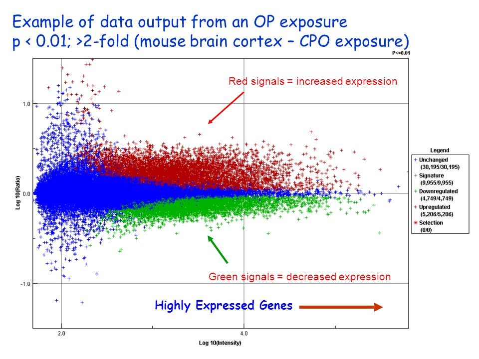 Example of data output from an OP exposure p 2-fold (mouse brain cortex – CPO exposure) Red signals = increased expression Green signals = decreased expression Highly Expressed Genes