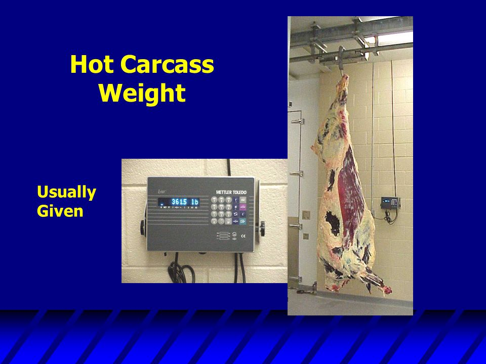 Hot Carcass Weight Usually Given