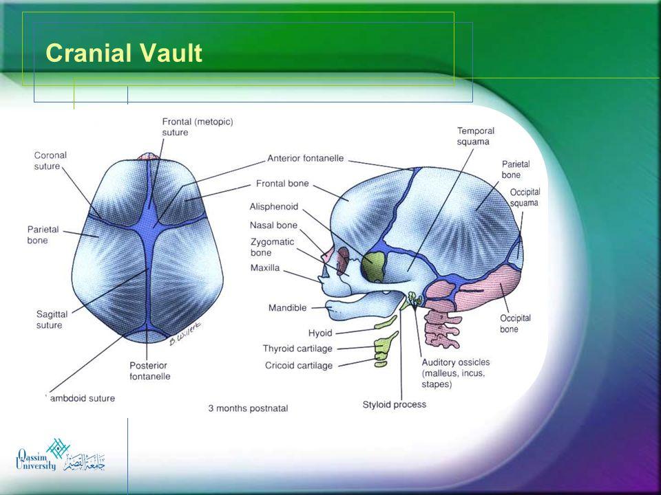 Cranial Vault