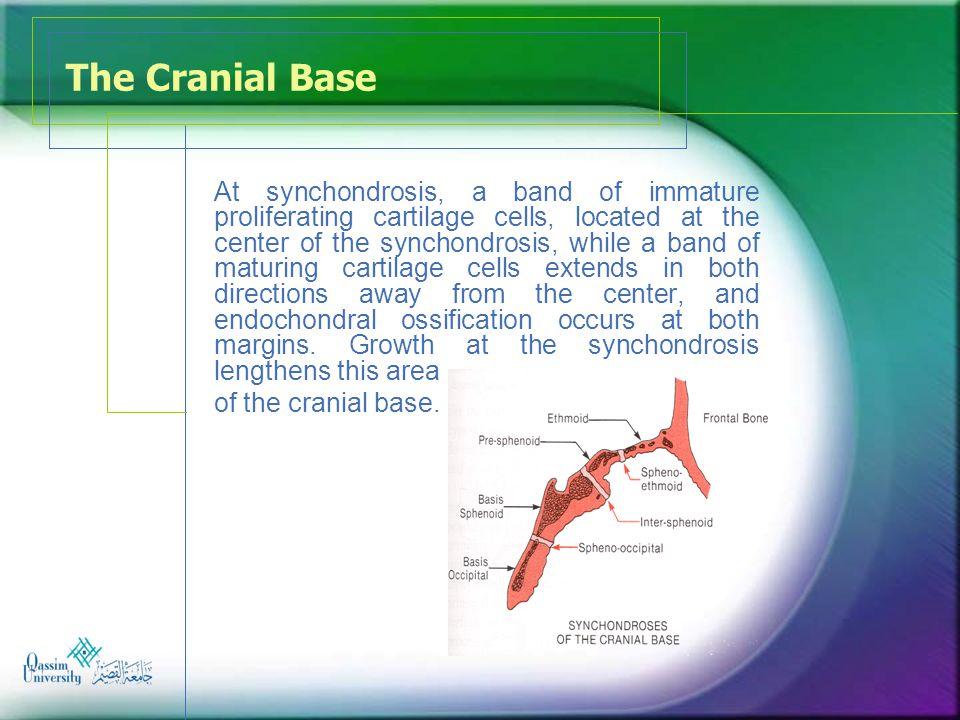 The Cranial Base