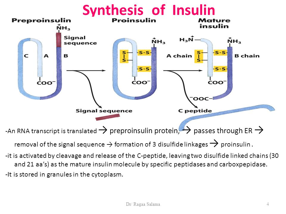 Dr/ Ragaa Salama4 Synthesis of Insulin -An RNA transcript is translated → preproinsulin protein, → passes through ER → removal of the signal sequence → formation of 3 disulfide linkages → proinsulin.