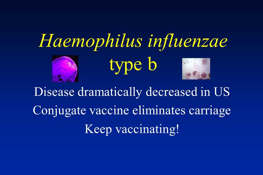 Haemophilus influenzae type b Disease dramatically decreased in US Conjugate vaccine eliminates carriage Keep vaccinating!