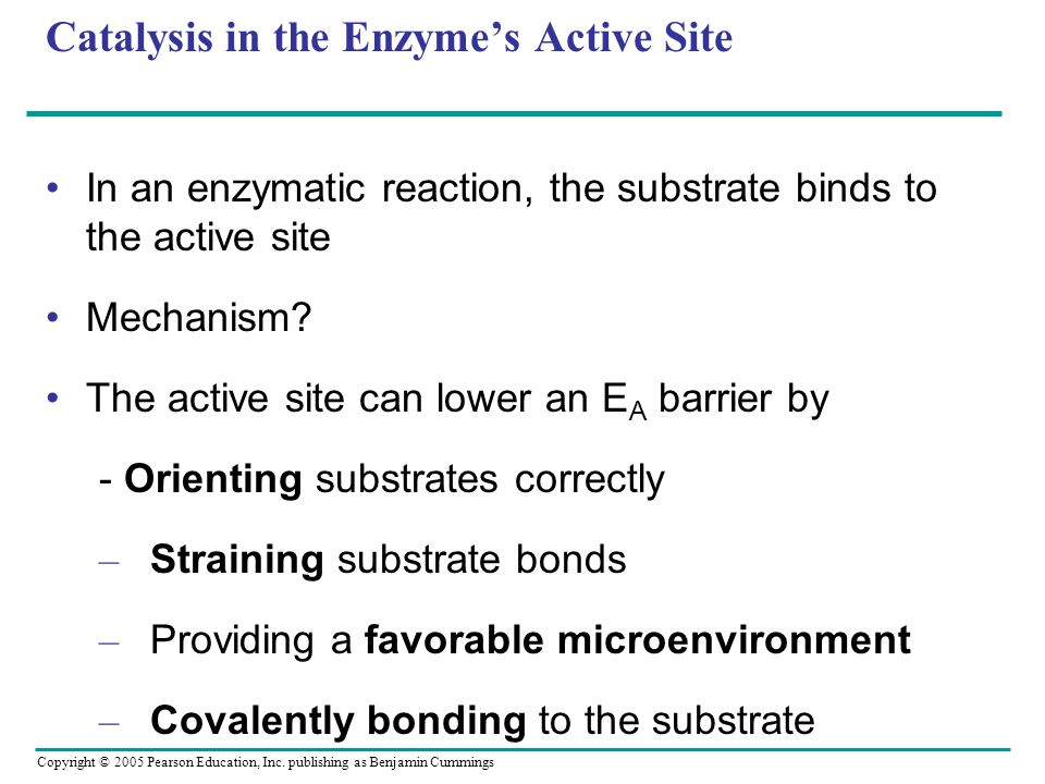 Copyright © 2005 Pearson Education, Inc. publishing as Benjamin Cummings Catalysis in the Enzyme's Active Site In an enzymatic reaction, the substrate