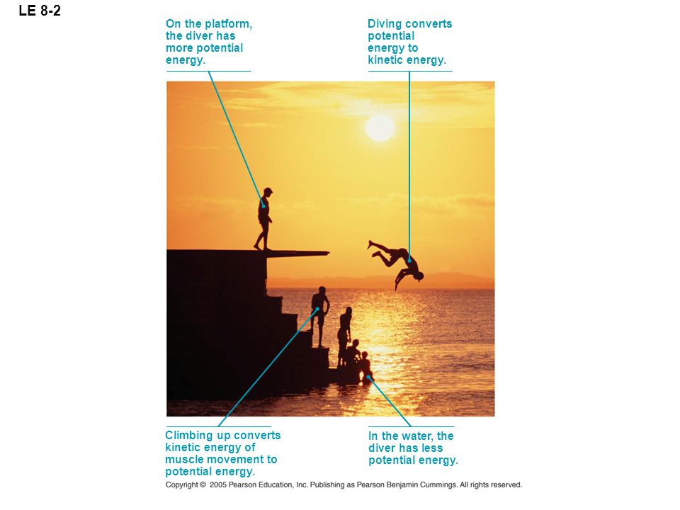 LE 8-2 On the platform, the diver has more potential energy. Diving converts potential energy to kinetic energy. Climbing up converts kinetic energy o