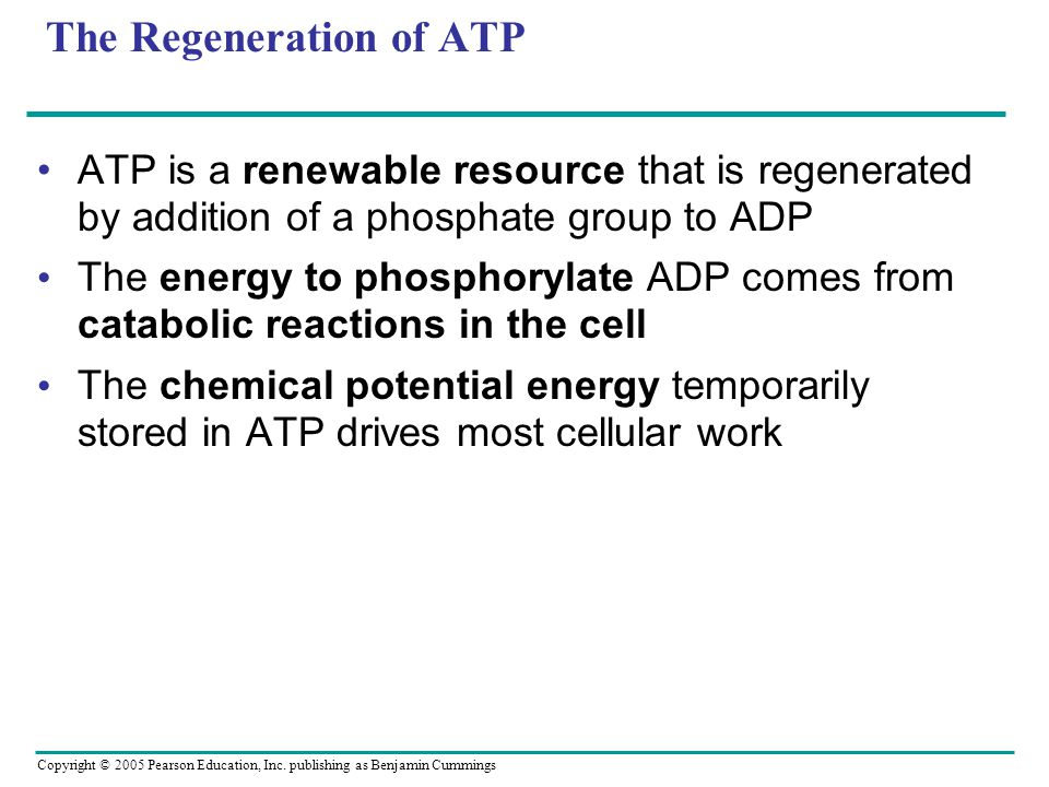 Copyright © 2005 Pearson Education, Inc. publishing as Benjamin Cummings The Regeneration of ATP ATP is a renewable resource that is regenerated by ad