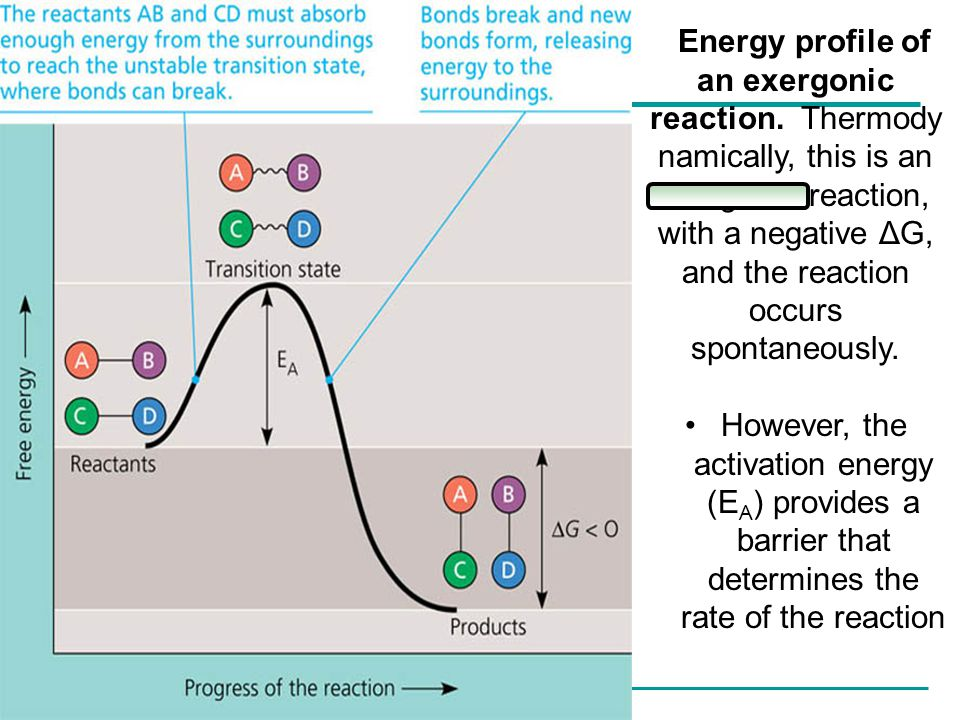 Copyright © 2005 Pearson Education, Inc. publishing as Benjamin Cummings Energy profile of an exergonic reaction. Thermody namically, this is an exerg