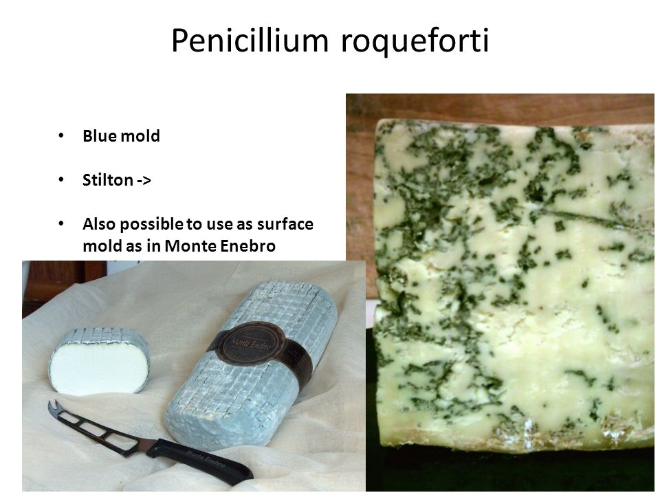 Penicillium roqueforti Blue mold Stilton -> Also possible to use as surface mold as in Monte Enebro