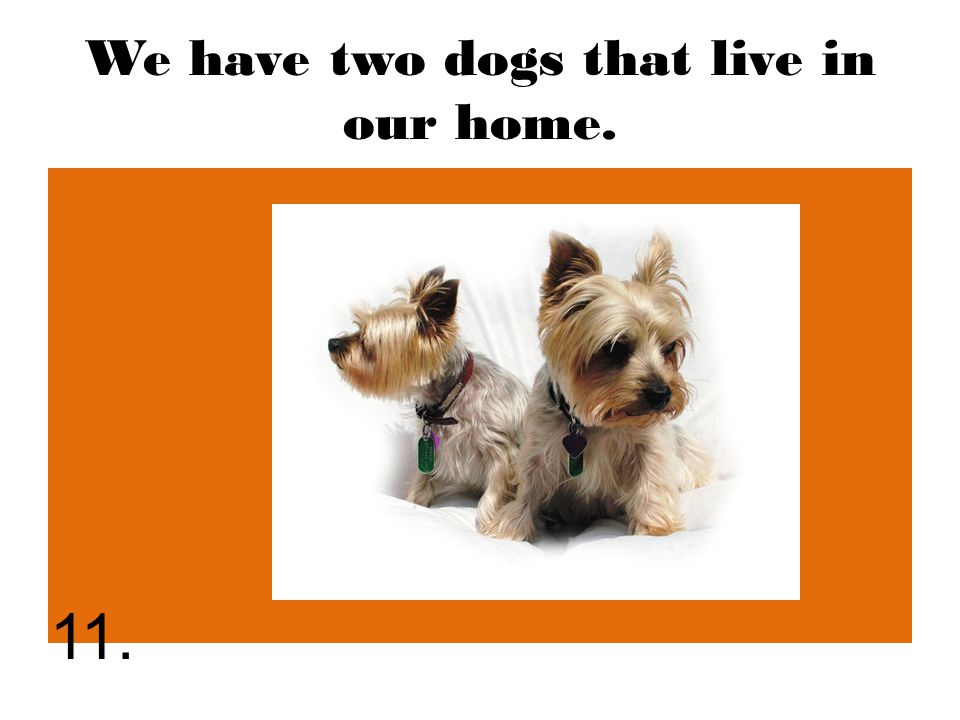 We have two dogs that live in our home. 11.