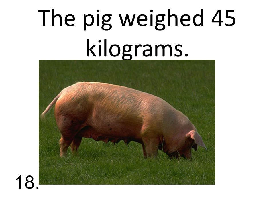The pig weighed 45 kilograms. 18.