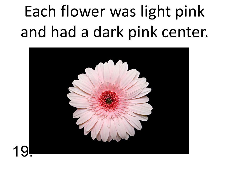 Each flower was light pink and had a dark pink center. 19.