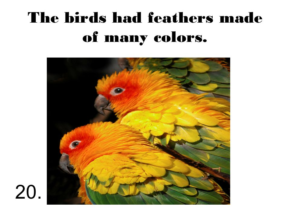 The birds had feathers made of many colors. 20.