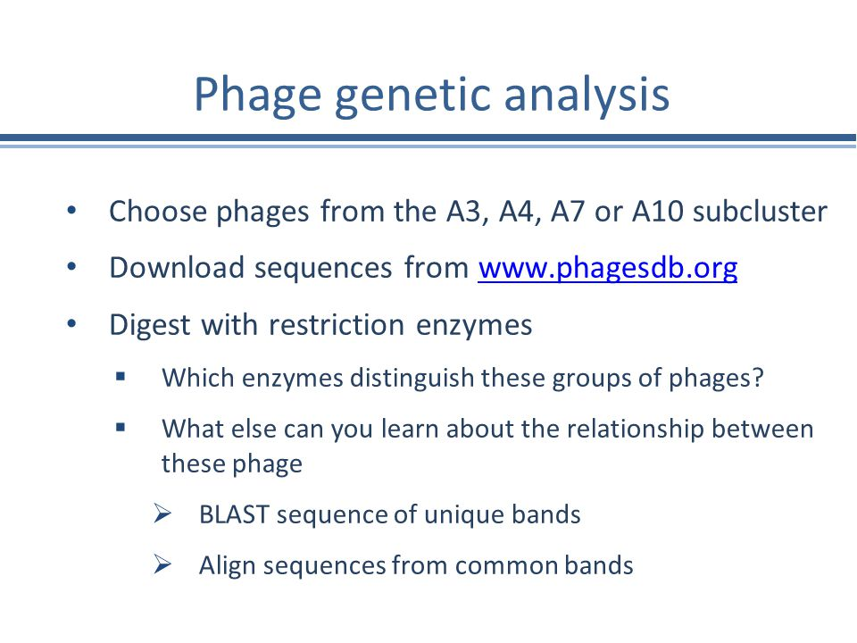 Phage genetic analysis Choose phages from the A3, A4, A7 or A10 subcluster Download sequences from www.phagesdb.orgwww.phagesdb.org Digest with restri