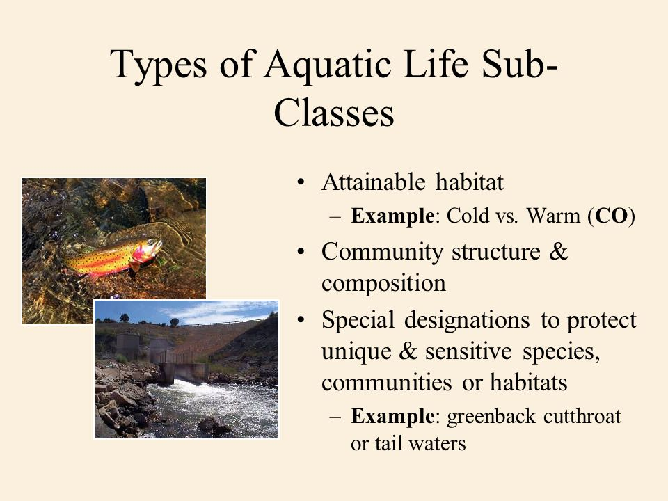 Types of Aquatic Life Sub- Classes Attainable habitat –Example: Cold vs. Warm (CO) Community structure & composition Special designations to protect u
