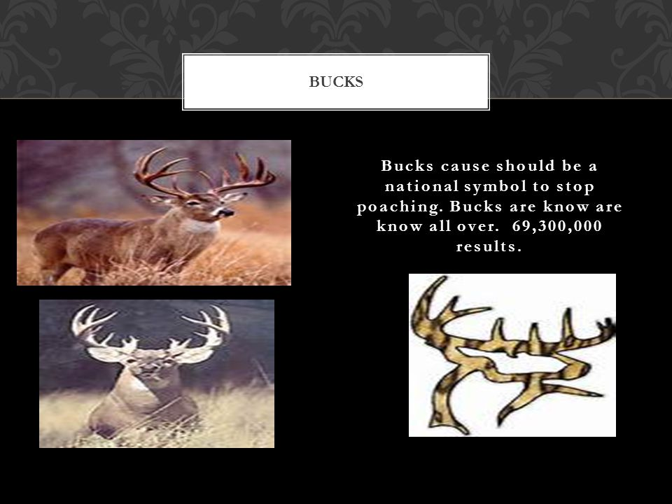 Bucks cause should be a national symbol to stop poaching.