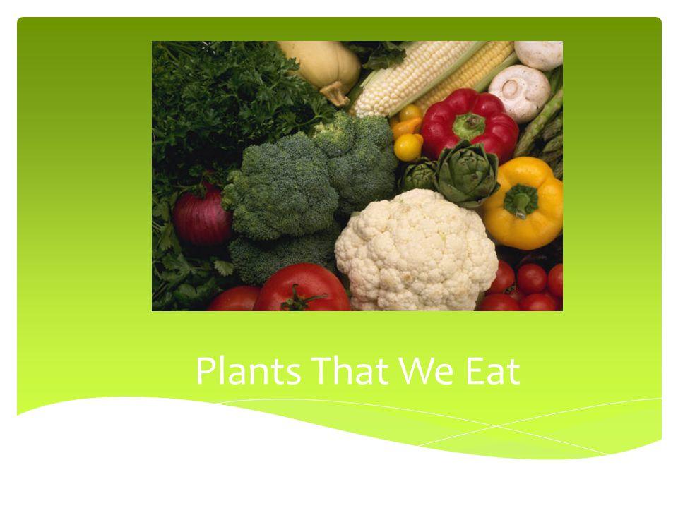 Plants That We Eat