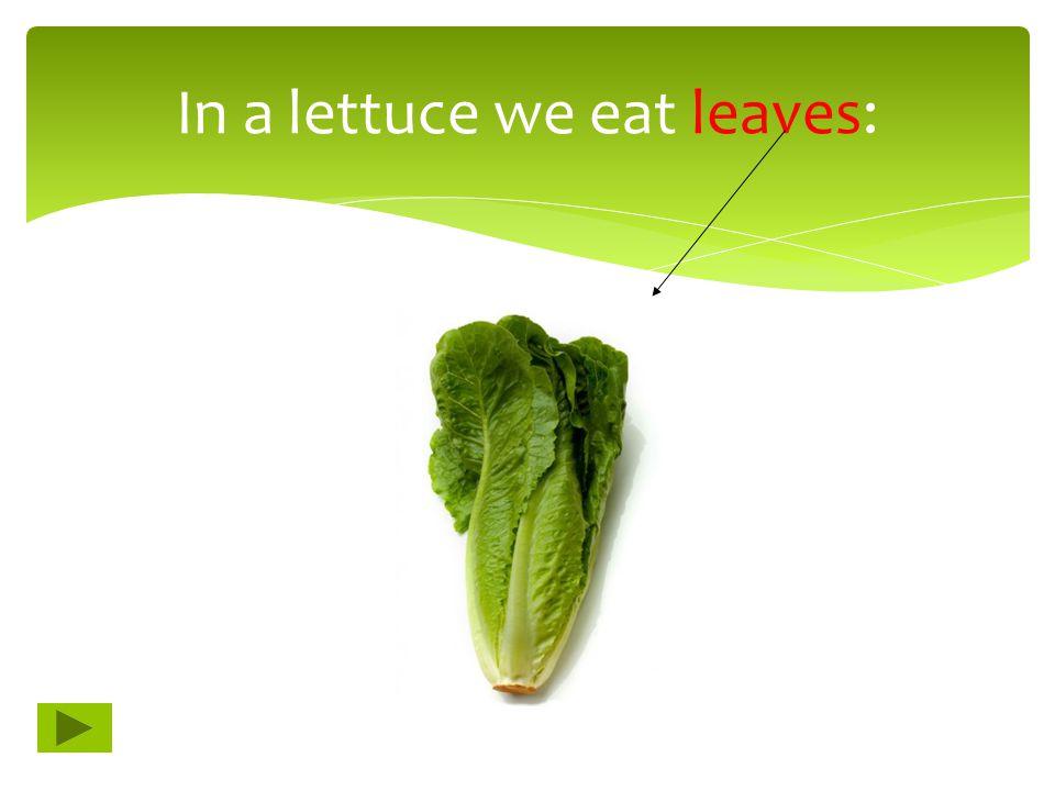In a lettuce we eat leaves: