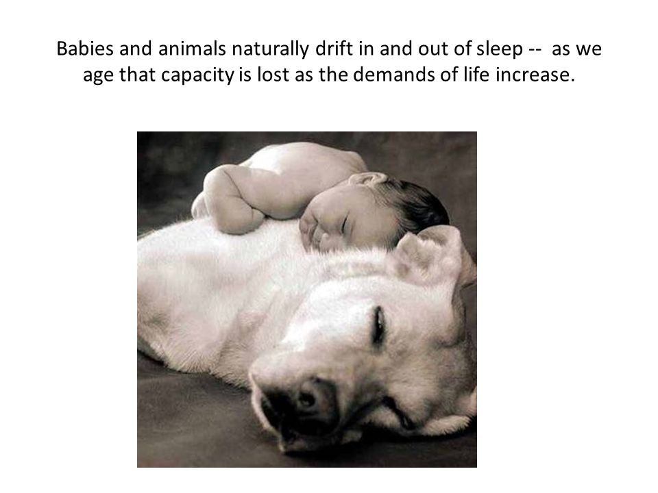 Babies and animals naturally drift in and out of sleep -- as we age that capacity is lost as the demands of life increase.